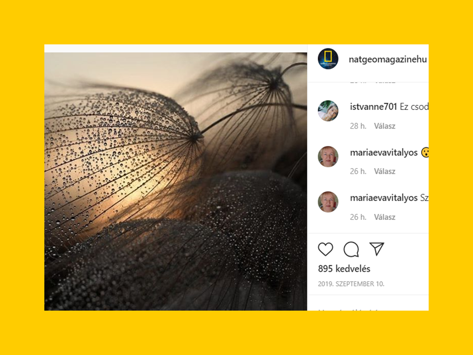 Az Instagramon legtöbb like-ot kapó kép 2019-ben, átlagosan a képekre 700-1 200 like érkezik